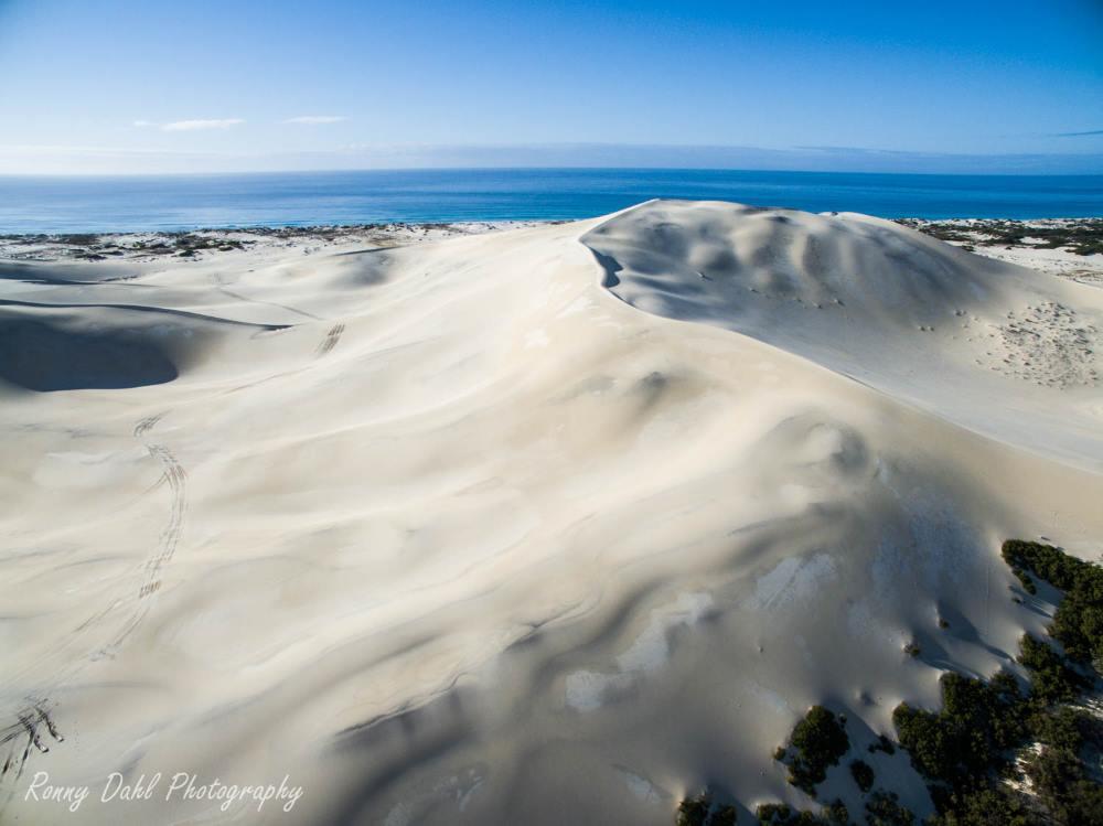 Dune giants.
