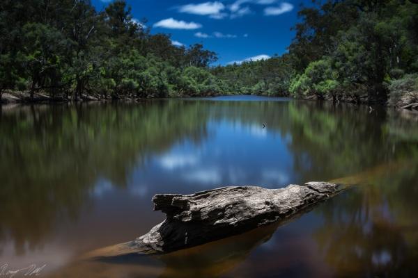 Murray River log, Western Australia.