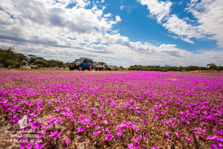 Western Australia wild flowers.