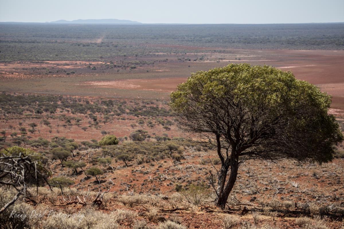 Ninghan Outback Station, Western Australia.