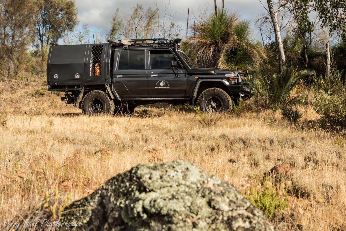 The 79 Series LandCruiser at Julimar.