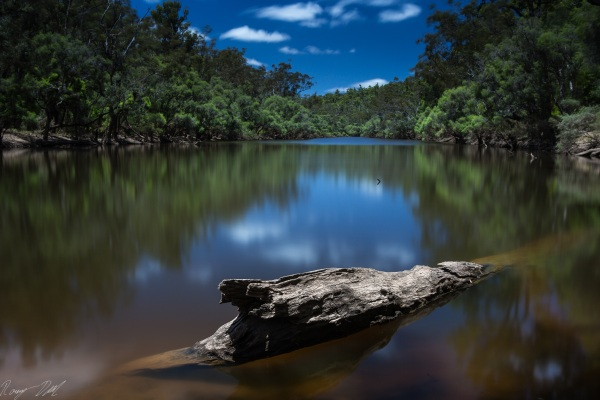 Murray River log, Western Australia.