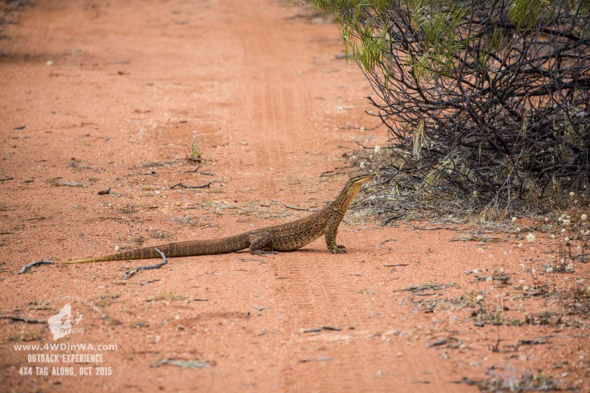 Outback Tag-Along tour, Western Australia.