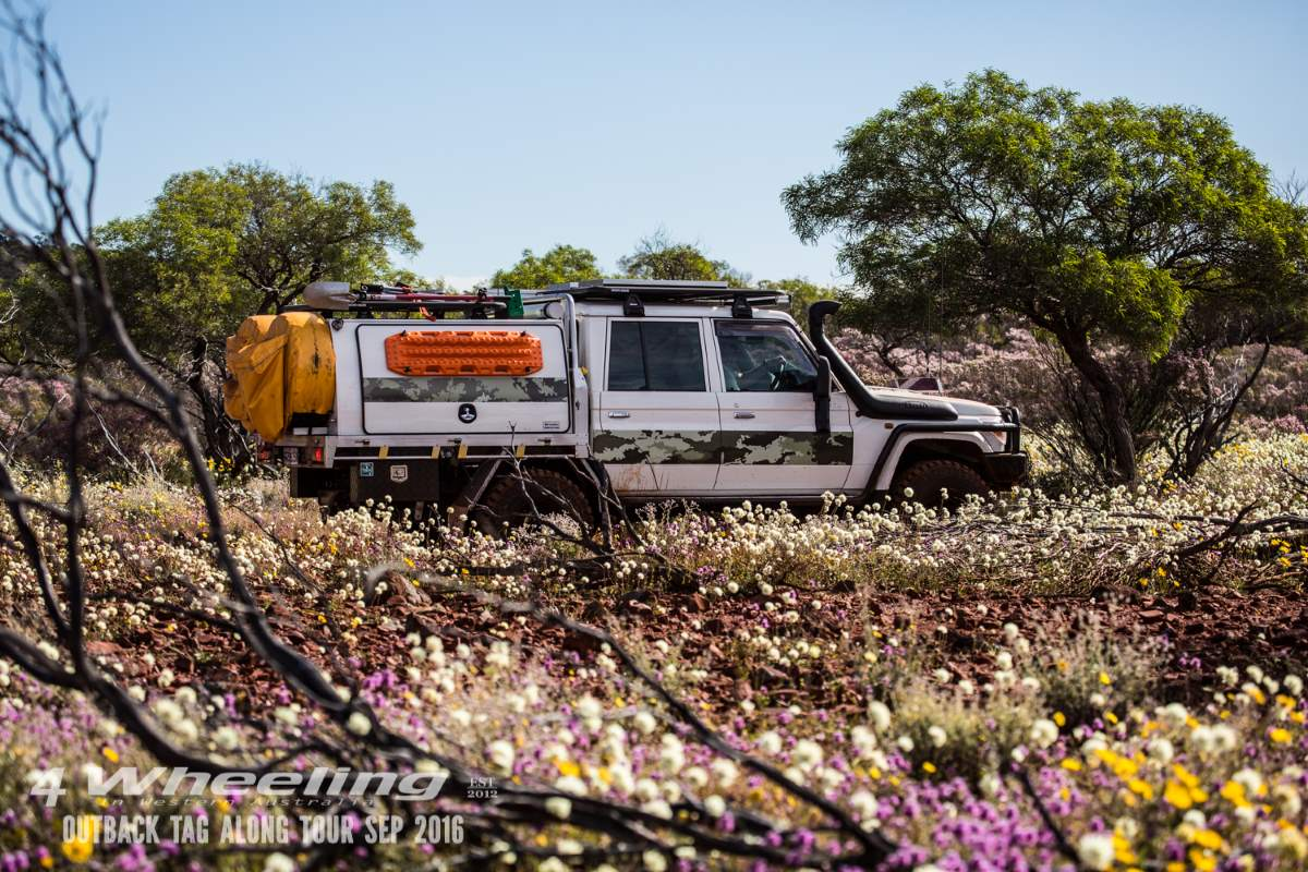 Wildflowers in the Outback Western Australia.