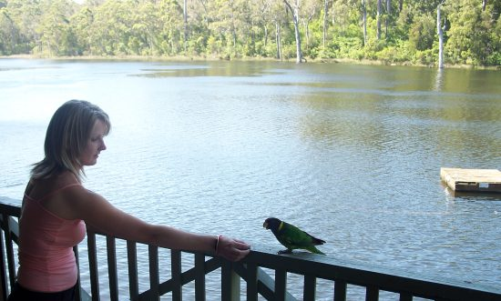 Feeding parrot at Karri Valley