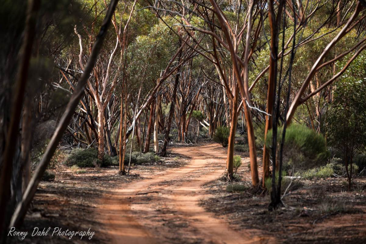 The Woodline Track, Western Australia.